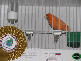 μεγάλο πουλί γαμάει τη γυναίκα
